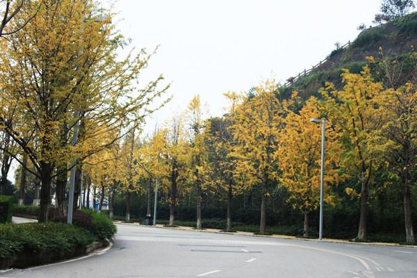土地利用如何影响街道树木和土壤